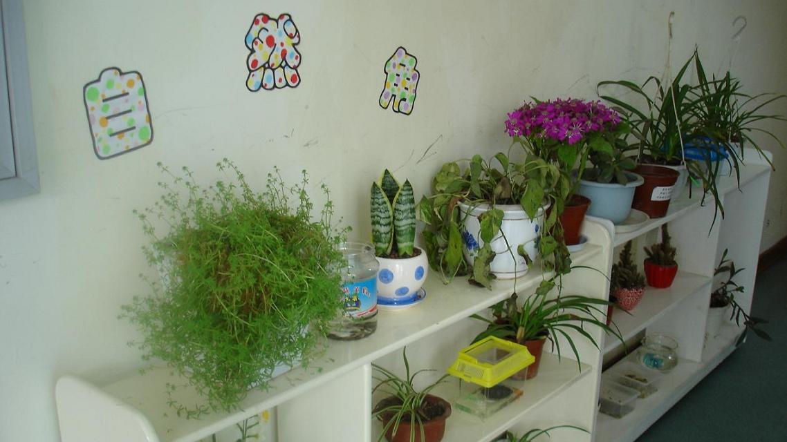 大量幼儿园环境布置照片 [4000张](5)