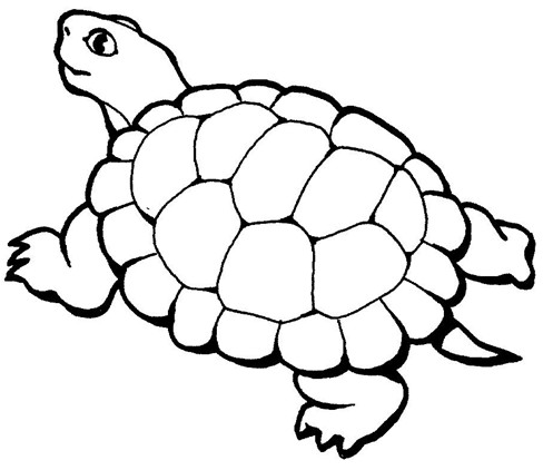幼儿园乌龟的简笔画