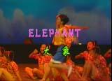 大象 elephant