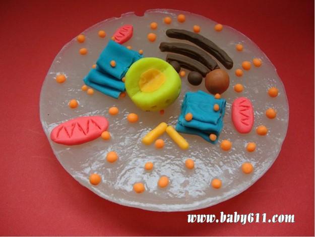 幼儿橡皮泥作品:多彩果盘_幼儿园橡皮泥;  2009手工作品 动物细胞