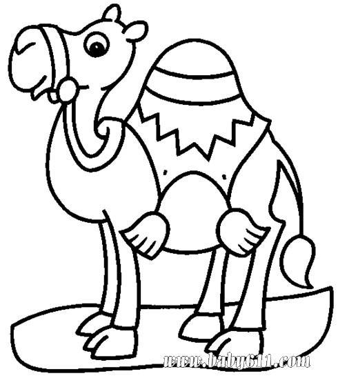 动物简笔画 骆驼