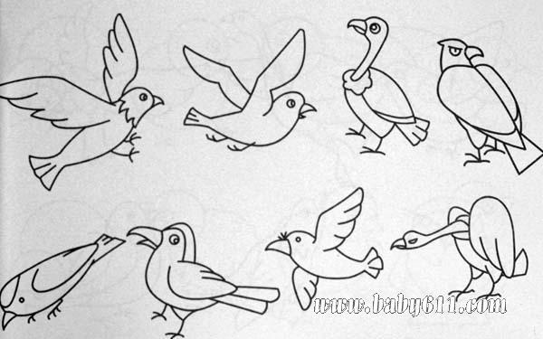 简笔画动物篇 鸟类1