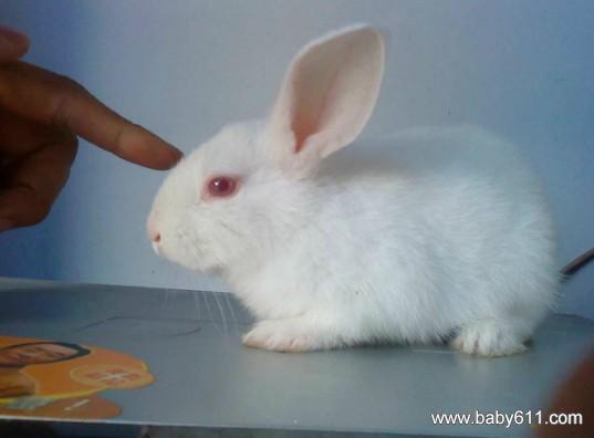 幼儿园小班科学《可爱的兔子》ppt课件免费下载
