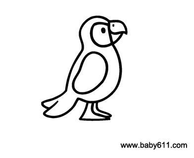 儿童简笔画 鹦鹉