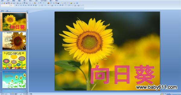 此课件总共12页,请点击下方按钮进行下载。 简要说明:   1、让幼儿尝试用各种点和线条来表现向日葵的籽盘、花瓣、叶、茎,在巩固线描的基础上进一步学习装饰。   2、鼓励幼儿大胆想象向日葵向阳生长的情景,初步激发幼儿创新意识。   早晨,太阳慢慢升起来了,葵花向着太阳,弯弯腰、招招手说:太阳你好!中午,太阳升得高高的,天蓝蓝的,云灿灿的,向日葵抬起头,对太阳说:太阳,你好!   小朋友们:你们都知道太阳花吗?都见过它吗?   它们是什么样的呀?   下面就跟老师一起看看太阳花吧!   小朋友们看了这些图