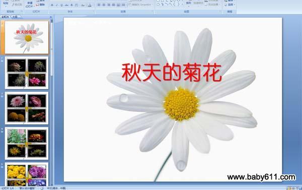 幼儿园中班秋天课件:秋天的菊花