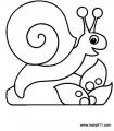 幼儿涂色简笔画:蜗牛