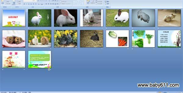 幼儿园小班语言活动ppt课件:认识兔子