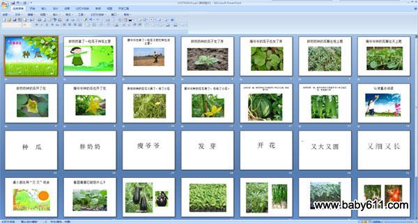 幼儿园大班语言儿歌 种瓜 多媒体ppt课件图片