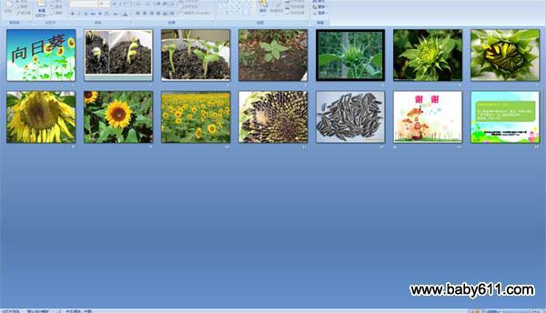 幼儿园大班科学课件:向日葵