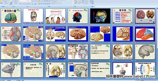 小学四年级科学(ppt课件):神奇的大脑