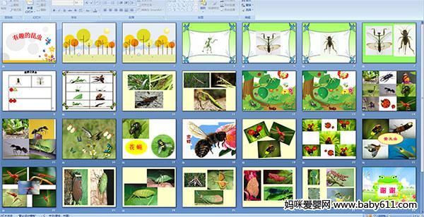 幼儿园大班科学——有趣的昆虫(多媒体课件)