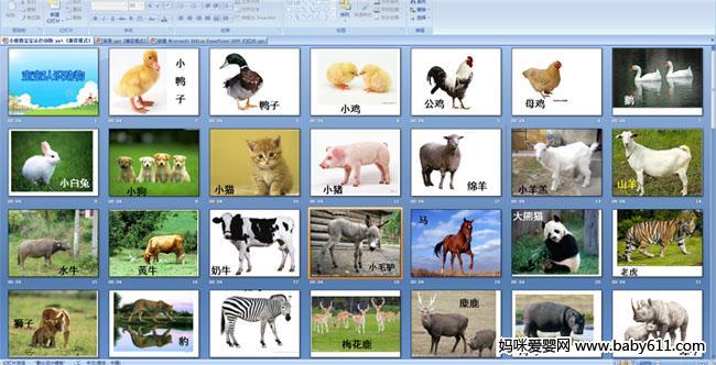 幼儿园小班语言认知 宝宝认识动物 PPT课件