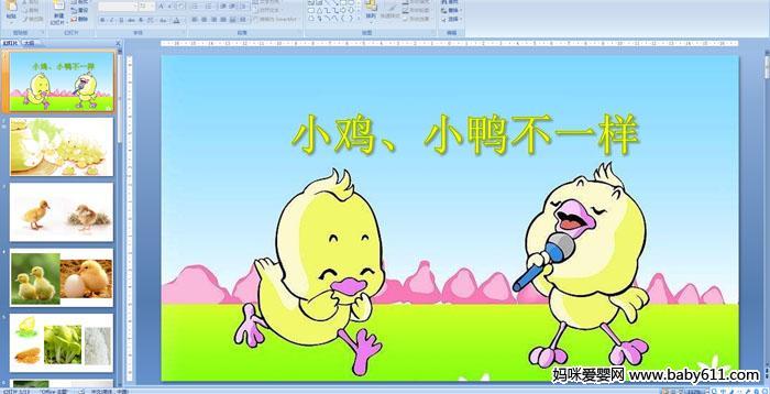 幼儿园小班科学《小鸡,小鸭不一样》ppt课件