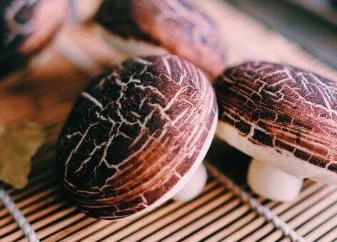 中式面点蘑菇包