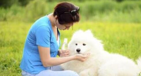 孕期养宠物要注意什么