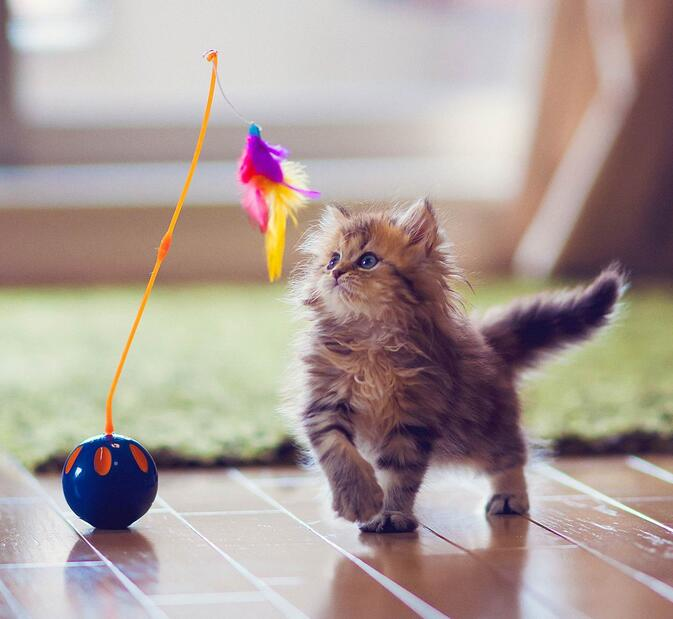 萌宠小猫咪