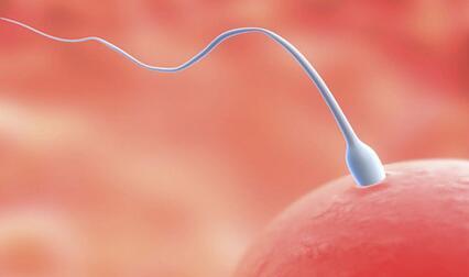 人工受孕方法,要注意什么?